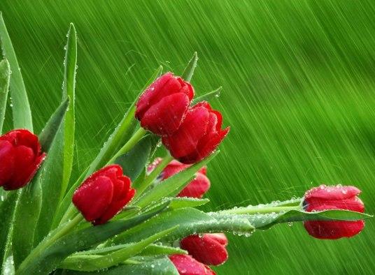 flores bajo lluvia